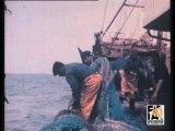 """Le chalutier """"Cote d'Ivoire"""" en pêche 1970"""