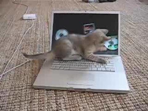 Un chaton sur un macbook pro