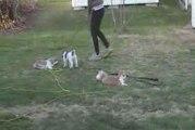 Jeux entre chien et chat