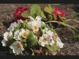 mes photos de Fleurs