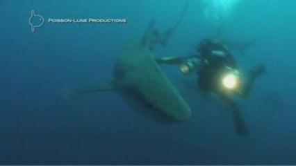 """Making Of """"il nage avec les requins"""" - Afrique du Sud"""