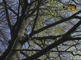 La Forêt de Soignes au fil du temps