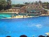 Spectacle de dauphins(4)