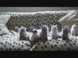 Des chatons bougent leur tête en rythme - Blog-videos.org