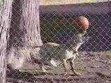 Un chien qui a du phoque - Blog-videos.org