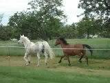 trot de deux chevaux