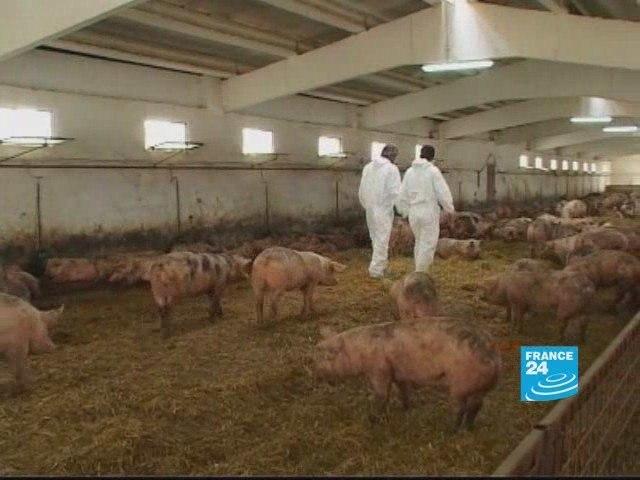 Romania:US pork producer giant causes local farmers problems