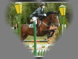 Concours Tertre 21.05.2009 - Red Bull & moi 80cm