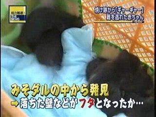 Baby-tanukis