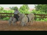 l'élevage des dieux : éleveur de chevaux, spectacle, pension