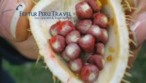 Iquitos Travel - The flora of Iquitos