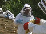 Concern as honeybees disappear from our gardens