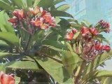 Inde du Sud : Pondichery