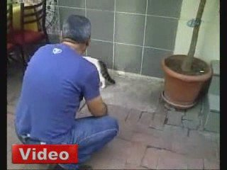 chat VS rottweiler